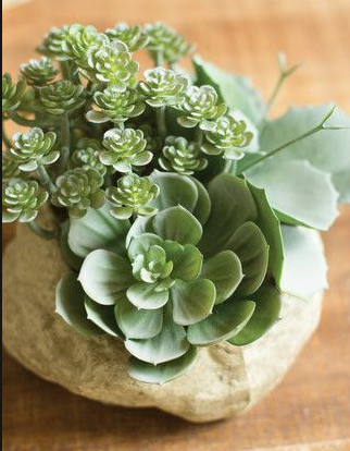 Succulent Garden in Rock Pot