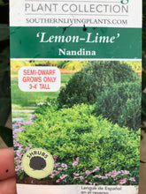 Load image into Gallery viewer, Nandina, Lemon-Lime #1