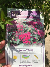 Load image into Gallery viewer, Spirea Red Lace #3