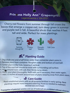 Crape Myrtle Princess Holly Ann #3