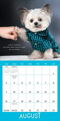 Norbert's Little Lessons for a Big Life 2020 Wall Calendar