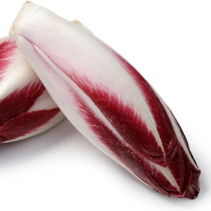 Chicory: Red x Head