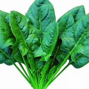 Spinach: Large Leaf x bunch