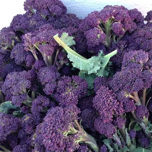 Broccoli: Purple Sprouting x 500gm
