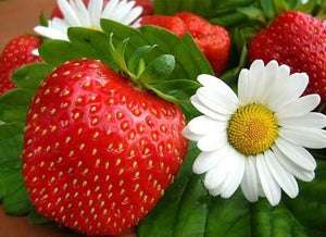 Strawberry white Flowers Fruit Diamond Painting
