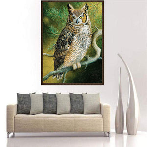 Lovely Owl Look At Viewer