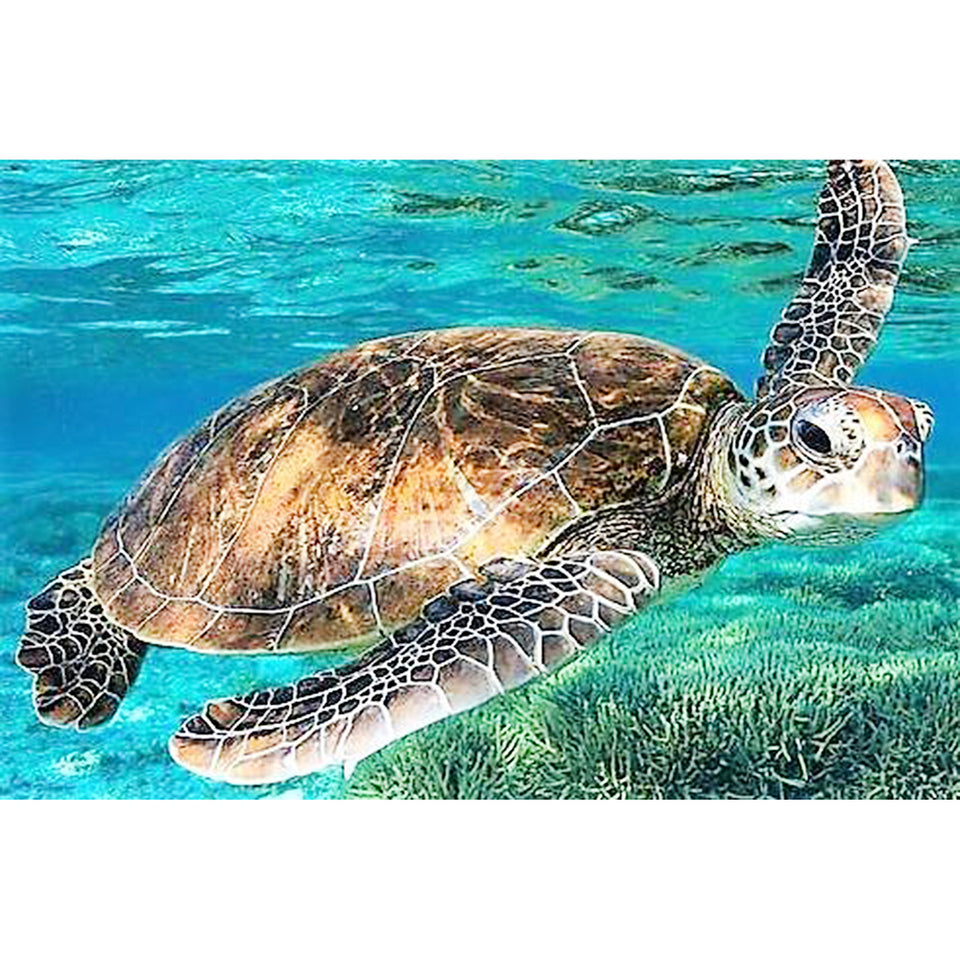 sea turtle diamond embroidery