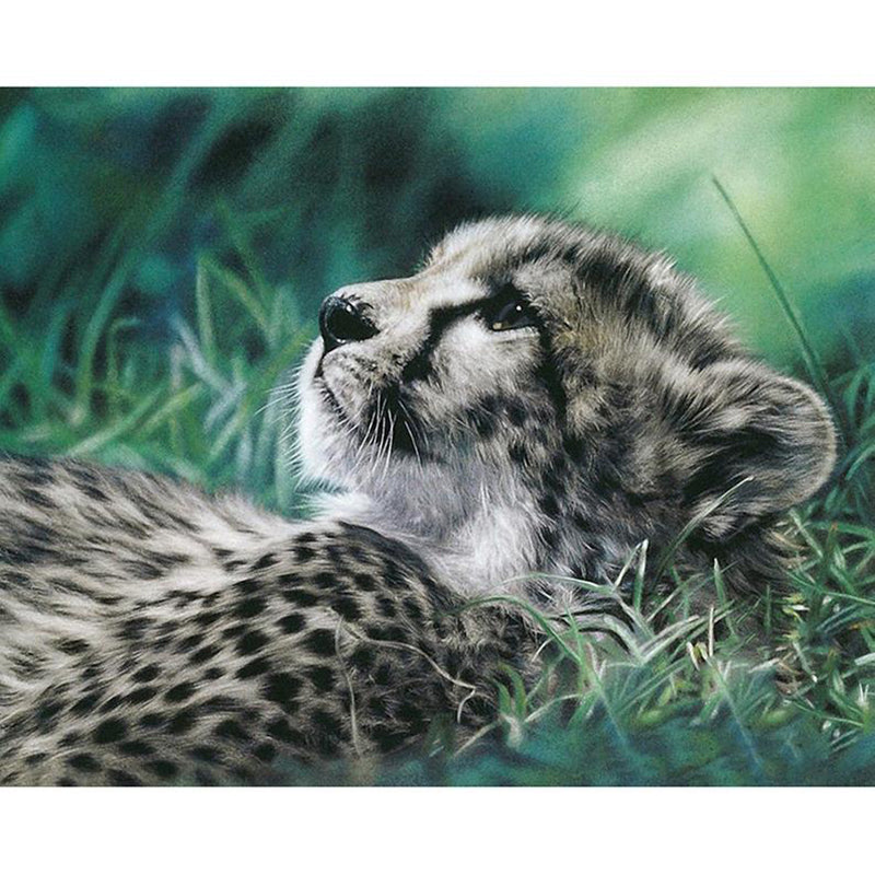 Animal Snow Leopard Needlework
