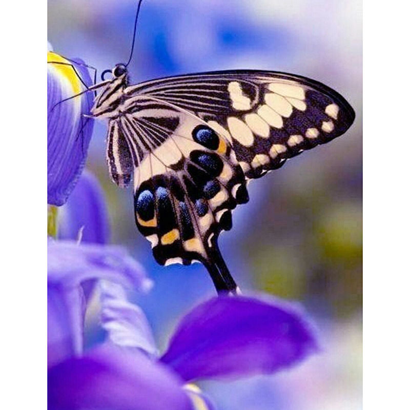 Purple Butterfly Diamond Painting