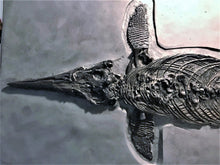 Load image into Gallery viewer, Replica prone <em>Ichthyosaurus communis</em> from Lyme Regis