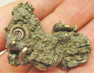 Pyrite multi-ammonite fossil (40 mm)