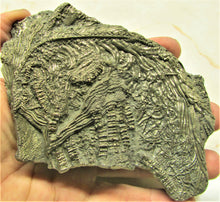 Load image into Gallery viewer, Large 3D golden pyrite crinoid (140 mm) <em>Pentacrinites</em>