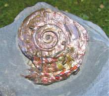 Load image into Gallery viewer, Fiery iridescent Psiloceras ammonite display piece