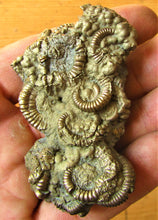Load image into Gallery viewer, Pyrite multi-ammonite fossil (70 mm)