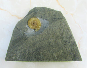 Calcite Promicroceras ammonite display piece (24 mm)