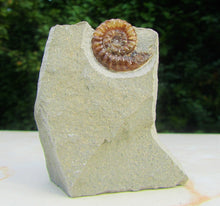 Load image into Gallery viewer, Calcite Promicroceras ammonite display piece (24 mm)