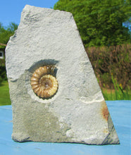 Load image into Gallery viewer, Calcite Promicroceras ammonite display piece (30 mm)