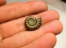 Load image into Gallery viewer, Near-perfect <em>Promicroceras pyritosum</em> ammonite (20 mm)