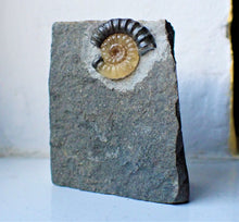 Load image into Gallery viewer, Calcite Promicroceras ammonite display piece with predator bite mark