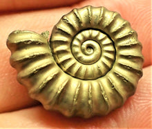 Load image into Gallery viewer, Large near-perfect <em>Promicroceras pyritosum</em> ammonite (21 mm)