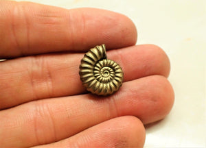 Perfect <em>Promicroceras pyritosum</em> ammonite (18 mm)