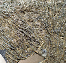 Load image into Gallery viewer, Large complete crinoid fossil head (125 mm) <em>Pentacrinites</em>