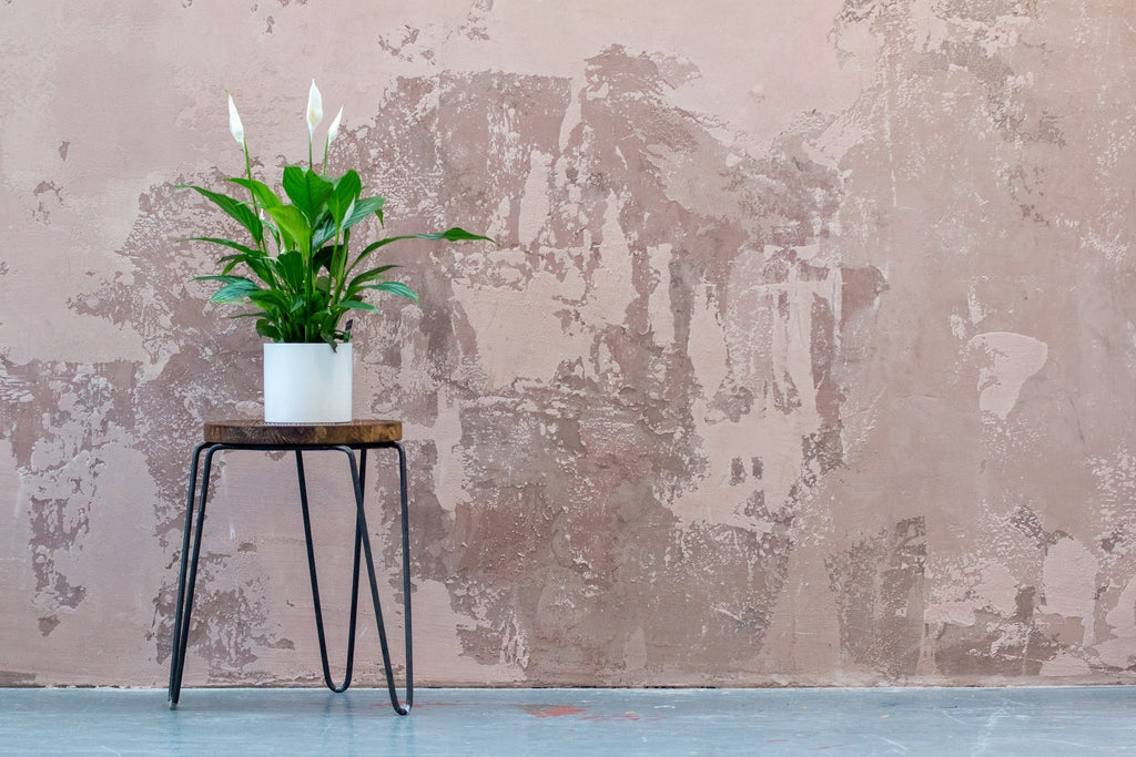 Plants that protect from mould and mildew