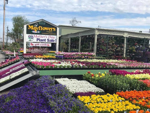 Mayflowers Nursery & Garden Center has a huge selection of annuals for springtime planting needs