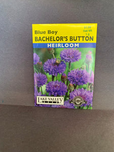 Bachelor's Button
