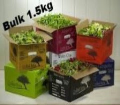 Baby Salad Mix - 1.5kg Box (Organic) - Green Mumma