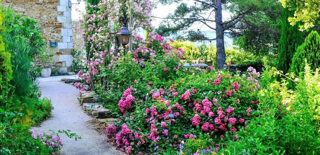 Rose bushes for Slovenia. We deliver bare root and potted garden roses all over Slovenia.