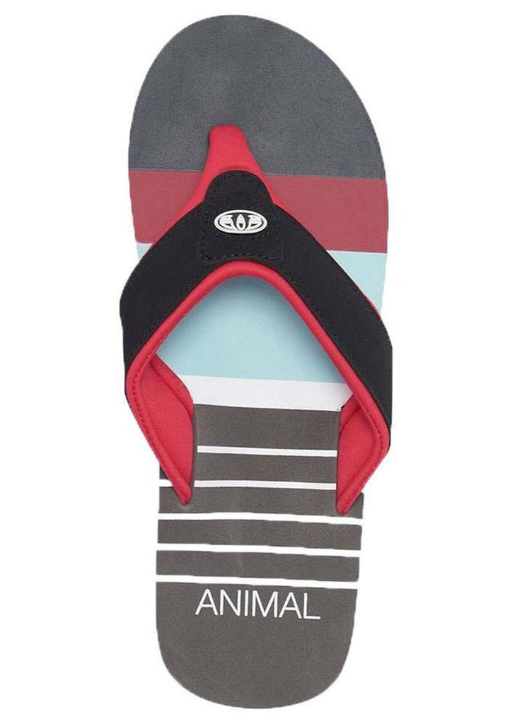 Animal Jekyl Swim - Red