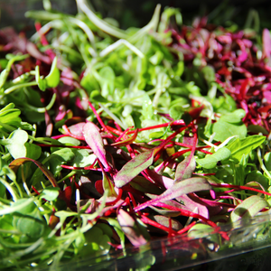 Micro Greens Rainbow Mix (8 ounce)