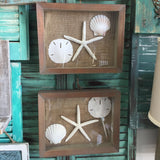 Sea Shell Star Fish Art