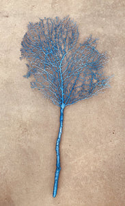 "13992 Coral Sea Fan-Pacific Blue, 35""h x 18""w"