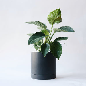 Romey Planter - Black