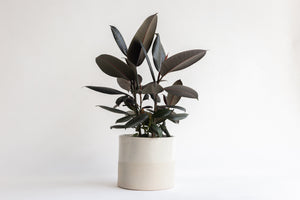 Barbara Stoneware Planter