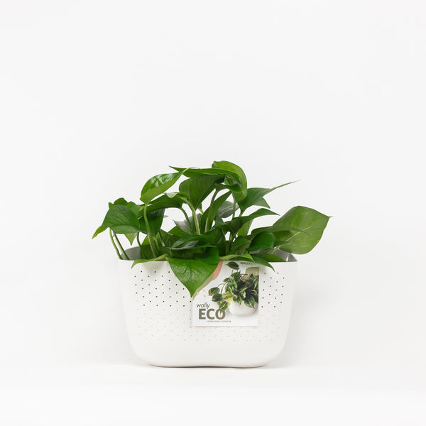 Wally Eco Wall Planter