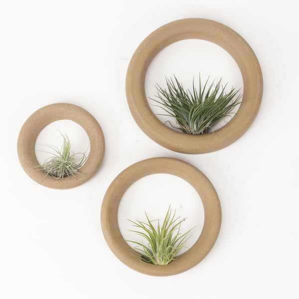 Natural Sweet Roll Airplant Hanger