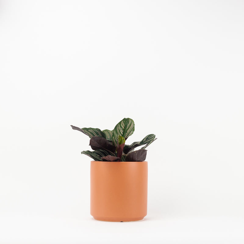 "7"" Ceramic Planter - Peach"