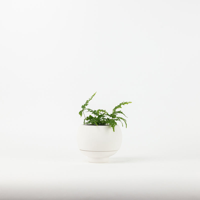 The Sutton Planter - White