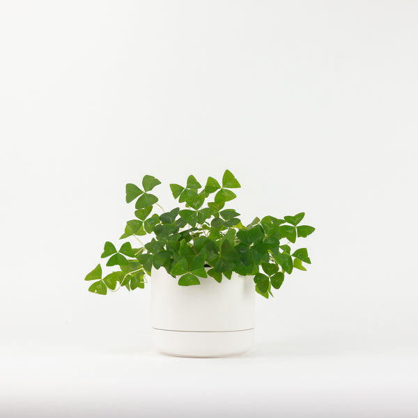The Large Franklin Planter - White