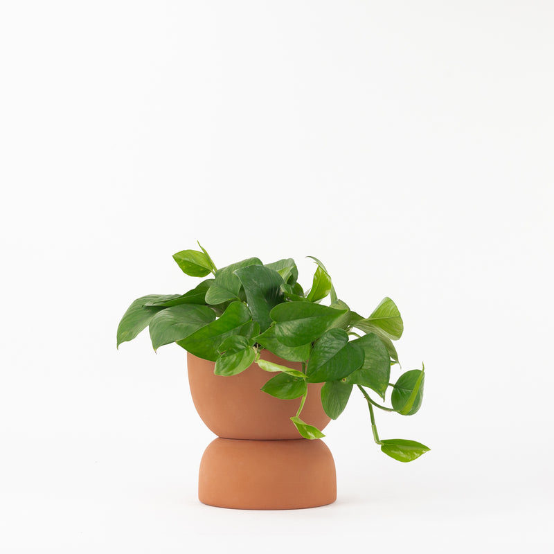 The Varick Planter - Terracotta