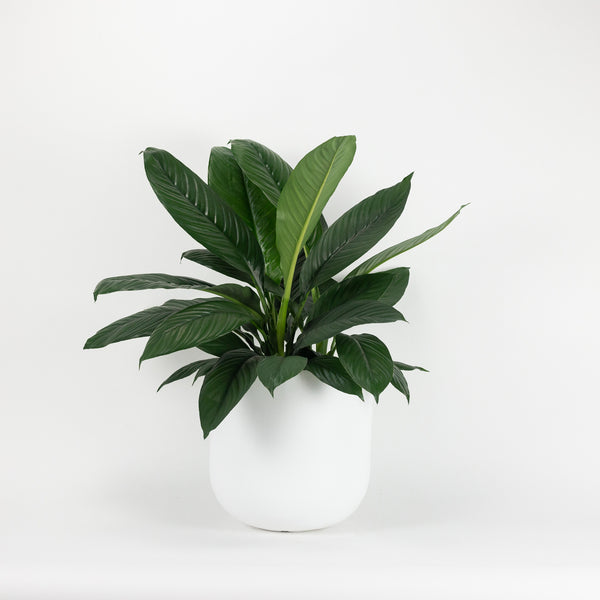 The Small Wythe Planter - White