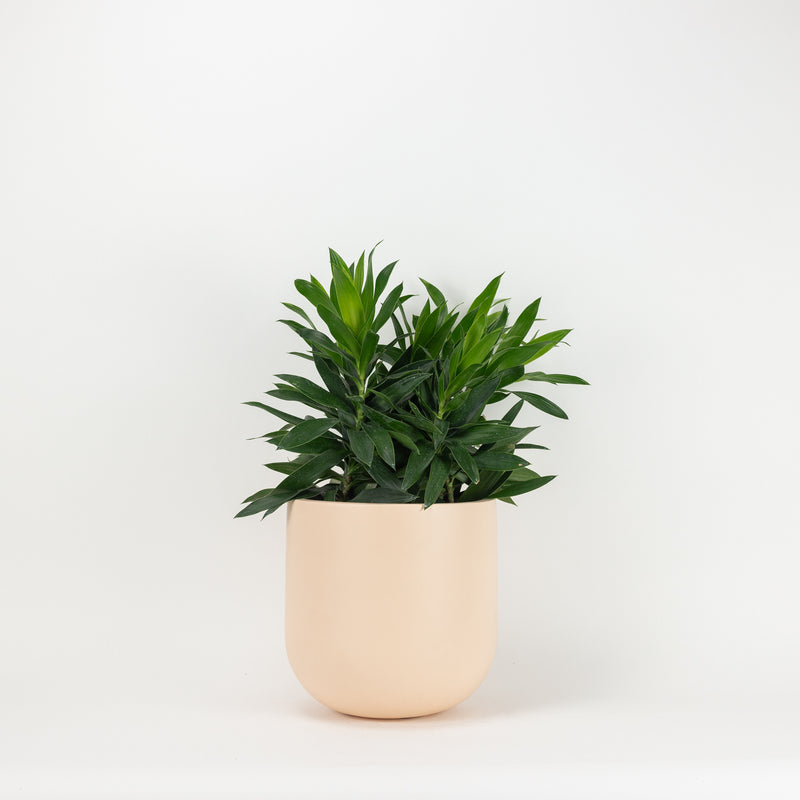 The Small Wythe Planter - Peach