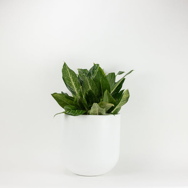The Large Wythe Planter - White