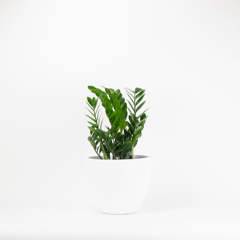 The Small Kent Planter - White