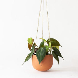 Medium Hanging Planter - Terracotta