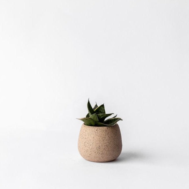 Palm Planter - Speckle