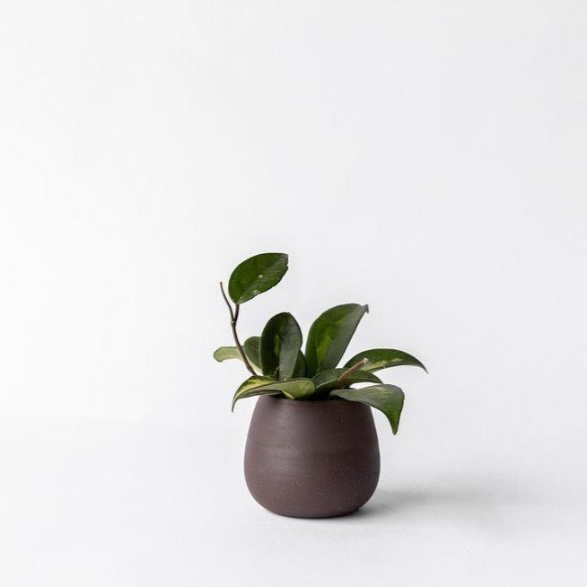 Palm Planter - chocolate